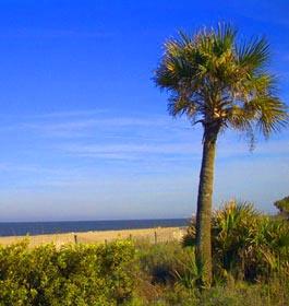 Tybee-Palm-Tree.jpg